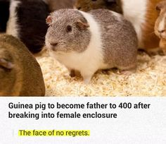He Holds The Guinea's World Record