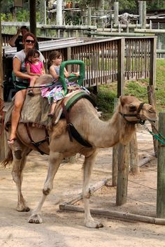 Tampa Lowry Park Zoo! Florida  My daughter used to love to ride the camel, over and over again.