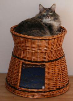 Cat House. Compilation 1 .. Discusión liveinternet - Servicio Ruso Diarios Online