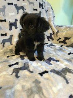 Image via We Heart It #adorable #cuteanimals #dog #puppies