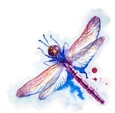 Dragonfly Stock Photos and Images. Dragonfly pictures and royalty free photography available to search from thousands of stock photographers. Color Vector, Vector Art, Eps Vector, Vectors, Dragonfly Illustration, Violet Background, Picture Icon, Artist Portfolio, Art Icon