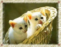 Minden napi jó kivánság - tajcsi.qwqw.hu Minden, Humor, Animals, Romantic Pictures, Animales, Animaux, Humour, Funny Photos, Animal