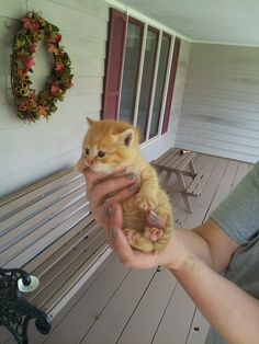 """found this little guy crying under our porch...the newest member of our family...meet Puff!"" #imgur #kitten"