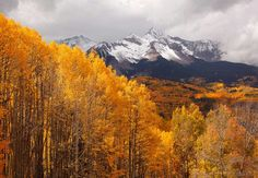 ***Brilliant aspens and view of Wilson Peak (near Telluride, Colorado) by Jack Brauer