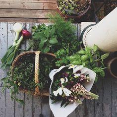 grayskymorning: Anne Parker | farmers market