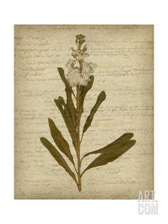 Romantic Pressed Flowers III Print