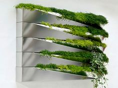 Still another idea for bringing plants inside and hanging them on a wall.