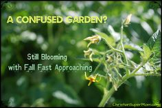 Is My Garden Terribly Confused?     ChristianSuperMom.com
