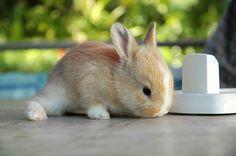 bunny :]