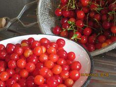 VYSSINO, or sour cherry spoon sweet
