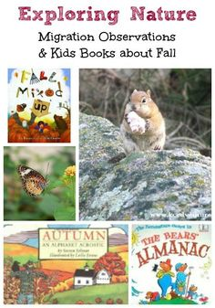Great books & science activities for Fall! Autumn is a wonderful season to explore the outdoors & learn about migration and seasonal changes! Fun Fall Activities, Nature Activities, Kids Learning Activities, Science Activities, Writing Activities, Fun Learning, Science Nature, Early Learning, Best Children Books