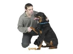 How to Touch Your Dog: Different ways of touching a dog result in different emotional responses.
