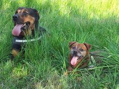 Hunde Foto: Elke und Aika und Nero - unser Hunde Duo.jpeg Hier Dein Bild hochladen: http://ichliebehunde.com/hund-des-tages  #hund #hunde #hundebild #hundebilder #dog #dogs #dogfun  #dogpic #dogpictures