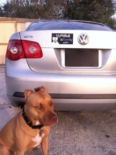 """I think you """"Jetta"""" check this out. Say it loud. Say it proud. """"My Pit Bull Is Family""""!"""