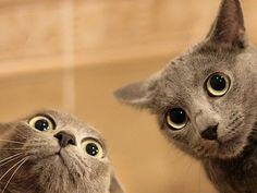 Historias freakies de gatos: cosas curiosas y extrañas que hacen a veces los gatos y que nos hacen cuestionarnos su lucidez.
