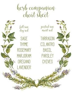 Herbs Gardening herb companion cheat sheet - mint alone, spreads out! - Are you ready for spring? I'm getting ready with this fun herb garden and printable herb companion cheat sheet. Herb Garden Design, Garden Types, Organic Gardening, Gardening Tips, Vegetable Gardening, Urban Gardening, Gardening Quotes, Fairy Gardening, Gardening Books