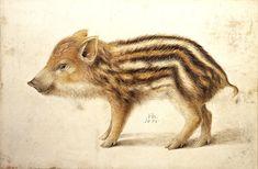Wild Boar Piglet, 1578, by Hans Hoffmann, circa 1530- 1591.