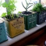 The Micro Gardener - making it easy to grow your own in small spaces.