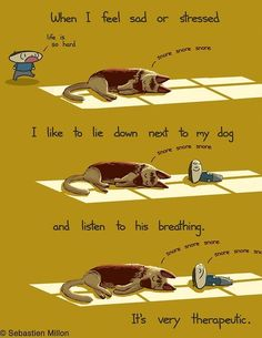 Dog Therapy - so very true