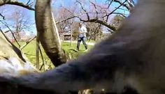 Squirrel Absconds with GoPro Camera - Neatorama