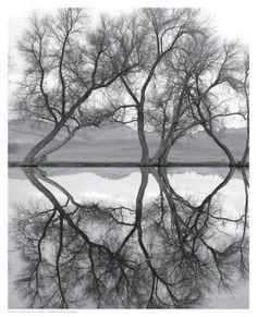 Clarity in the Waters Impressão artística