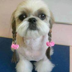 YOU GOTTA LOVE THE HAIR!!!   SHE LOOKS LIKE MY KIMMI GIRL.