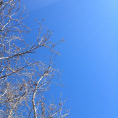 Clear sky #winter #sky #tree #nature #mindfulafternoon