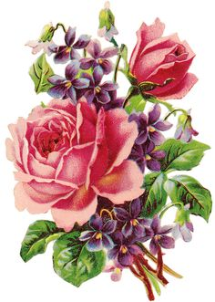 pretty rose and violets clip art