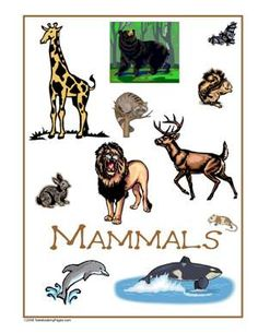 Sample Gallery - Nature Study Pages Kids Things To Do, Nature Study, Scouts, Moose Art, Gallery, Animals, Children's Books, Animales, Animaux