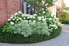 Hydrangea landscaping, Garden, Hydrangea garden, Boxwood landscaping, Front g. Boxwood Landscaping, Hydrangea Landscaping, White Gardens, Garden Shrubs, Moon Garden, Garden Planning, Beautiful Gardens, House Landscape, Front House Landscaping