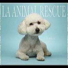 ― Bichon Frise Rescue ― ADOPTIONS Bichon Frise Rescue, Post Animal, Shelter, Adoption, Teddy Bear, Dogs, Animales, Foster Care Adoption, Pet Dogs