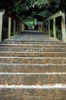 Stairway to heaven - the Dipsea Trail Looking forward to those stairs every June