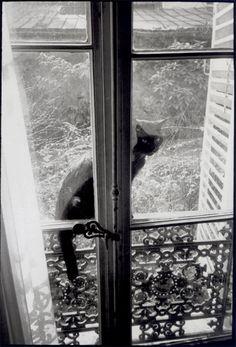 Henri Cartier-Bresson - Le chat sans maître