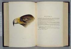 国立国会図書館貴重書展:展示No.96 グールド『オーストラリア鳥類概説』Gould, John, 1804-1881. A synopsis of the birds of Australia, and the adjacent islands. London: J. Gould, 1837-38. 4 pts. in 1 v. 8° 国立国会図書館