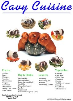 Image detail for -Cavy Cuisine - New South Wales Cavy Club Inc