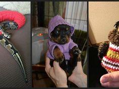 Zvieratká v mini svetríkoch: Toto bude dnes najrozkošnejšia vec, akú uvidíš