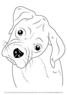 Learn How to Draw Boxer Puppy Face (Farm Animals) Step by Step : Drawing Tutorials