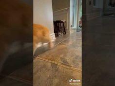 Hardwood Floors, Rabbit, Kitten, Cats, Tik Tok, Shorts, Youtube, Wood Floor Tiles, Bunny