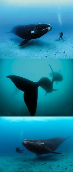 Diving with Whales - Brian Skerry braves the waters of the Antarctic for a very up-close view of the right whale. (  http://www.youtube.com/watch?v=08fM0XxRLNI )