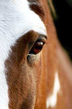 Horse by BlakGrafix