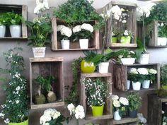 caisses et plantes vertes - crates and plants