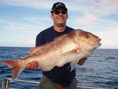 Reef Encounters - Marion Bay SA