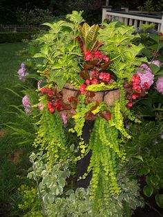 A Priscilla Crawford post planter with Begonias, and Creeping Jenny in the mix.