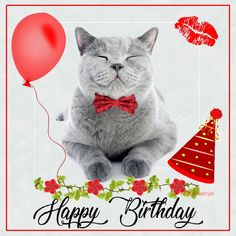 Happy Birthday Emoji, Happy Birthday Messages, Cat Birthday, Happy Birthday Greetings, Happy Anniversary Wedding, Cat Cards, Birthday Pictures, Happy Animals, Birthdays