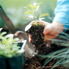Step 6: Get Planting. When you know all of your plants are in exactly the right spots, plant them in the ground. It's helpful to loosen or tease the plants' roots before you put them in the ground, especially if they were rootbound.