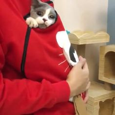 😻Putting on this hoodie, it's very easy to hang out with your kitty.🎄Get yours now🛒🐈 Cute Funny Animals, Cute Baby Animals, Animals And Pets, Cute Cats, Funny Cats, Ways To Cuddle, Dog Hammock, Beautiful Cats, Cat Breeds