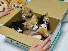 kitten box !