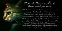 Trastos de Bruja: Protección de Mascotas