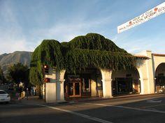 Downtown, Ojai, California, where I teach acting at the Ojai Film Festival        (14) by Ken Lund, via Flickr