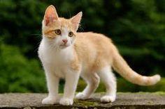 Afbeeldingsresultaat voor kitten